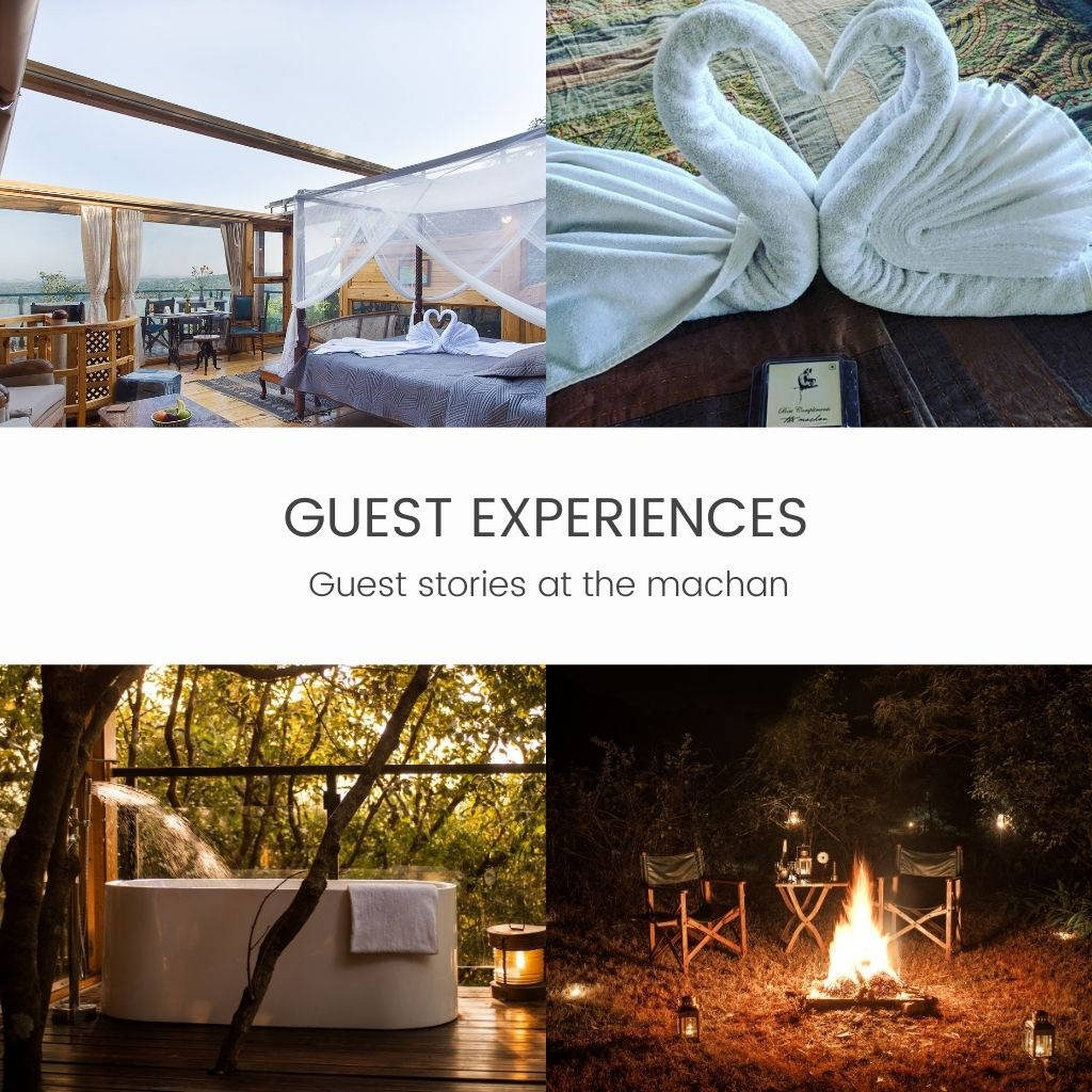 Our Guest Experiences
